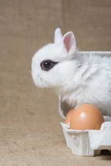 White Bunny In The Eggbox Royalty Free Stock Photography