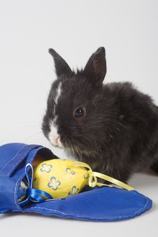 Black Bunny And Backpack And A Yellow Easter Egg Stock Photos
