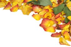 Free Withered Rose Petals Royalty Free Stock Photo - 4505685