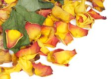 Free Withered Rose Petals Stock Photo - 4505690
