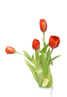 Free Red Tulips Isolated Stock Photography - 4505702