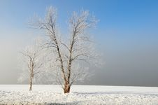Winter Landscape With Fog Stock Photography