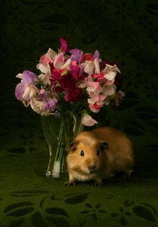 Free Porpoise & Flowers Royalty Free Stock Photos - 4507988