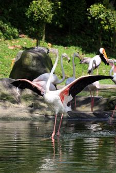 Free Flamingo Portrait Royalty Free Stock Photo - 4508895