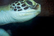 Free Turtle Stock Image - 4509221