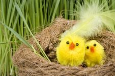 Free Two Chickens In A Nest Royalty Free Stock Image - 4509516