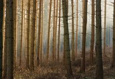 Free Winter Forest Stock Photo - 4509520