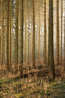 Free Winter Forest Stock Images - 4509524