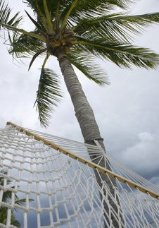 Hammock Hanging From Palm Tree Royalty Free Stock Images