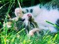Free Cute Kitten Stock Photo - 4519320
