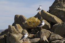 Free Three Little Birds Stock Photo - 4510340