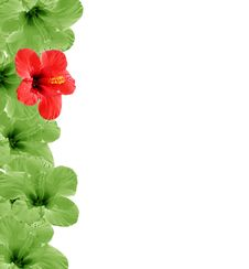 Free Beautiful Floral Background Stock Images - 4510534