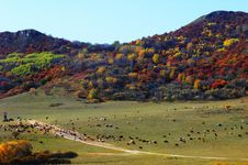 Beautiful Colorful Mountain In Autumn Royalty Free Stock Photography