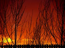 Sunset Fence And Tree Silhouettes Royalty Free Stock Photography