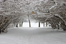 Free After Snowstorm. Stock Images - 4512714