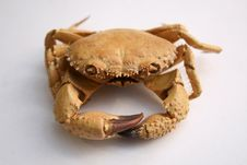 Free Crab Royalty Free Stock Photos - 4513238