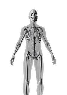 Free Anatomy Royalty Free Stock Images - 4513949