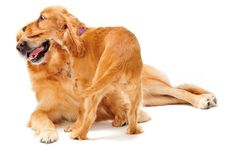 Free Dog And Puppy Stock Photos - 4514813