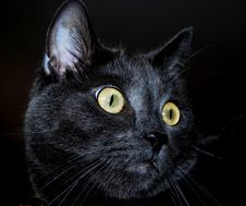 Free Black Cat Royalty Free Stock Photography - 4514967