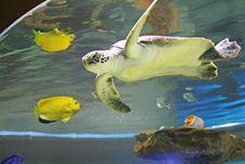 Free Turtle Stock Photos - 4515683