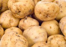 Free Fresh Potatoes Stock Images - 4515754
