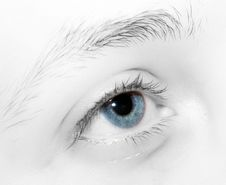 Free Blue Eye Stock Photo - 4516710