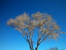 Free White Tree-Centered Royalty Free Stock Photos - 4517048