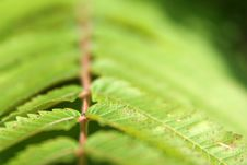 Free Green Leaf Of The Fern Royalty Free Stock Images - 4518109