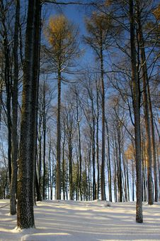 Free Forest In Winter Stock Images - 4518294