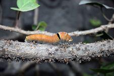 Free Caterpillar Stock Photography - 4518862