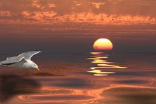 Sunset And Gull Stock Photos