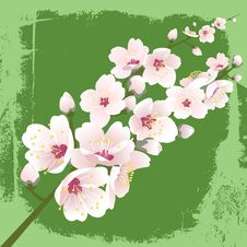 Free Spring Blooming Royalty Free Stock Images - 4519109
