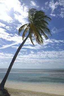 Free Palm Tree On Tropical Beach Stock Photo - 4519200