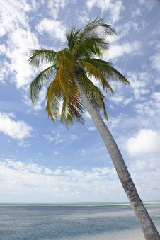 Free Palm Tree On Tropical Beach Royalty Free Stock Photos - 4519318