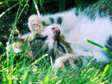Free Cute Kitten Stock Photo - 4519320