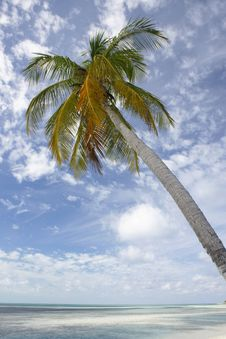 Free Palm Tree On Tropical Beach Stock Image - 4519371