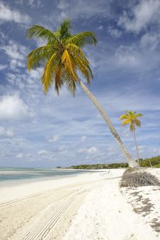 Free Palm Trees On Tropical Beach Royalty Free Stock Image - 4519506