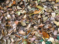 Free Dry Leaves Royalty Free Stock Images - 4520529