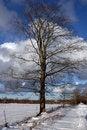 Free Tree Stock Image - 4524211