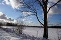 Free Tree Stock Photo - 4524250