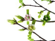 Spring Twig Royalty Free Stock Image
