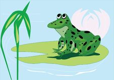 Free Happy Frog Stock Image - 4524261