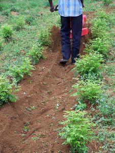 Free Garden Tool Stock Photo - 4524480