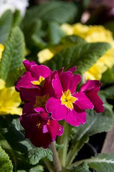 Free Flower Stock Image - 4524581