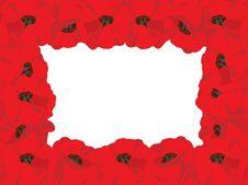 Free Poppy Royalty Free Stock Photos - 4526008