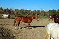 Horse 11 Stock Photos