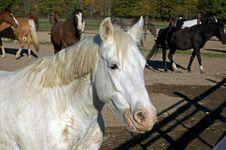 Horse 12 Stock Photo