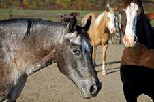Horse 13 Stock Photos