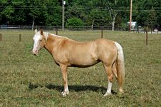 Horse 14 Stock Image