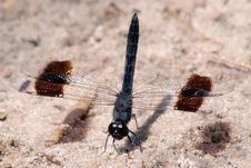 Free Dragon Fly Royalty Free Stock Photo - 4527355